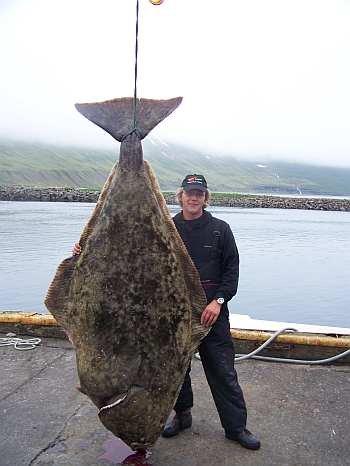 Andre vom Team Daiwa mit seinem gigantischen 175-Kilo-Heilbutt.