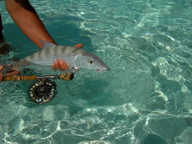 Bonefish und Fliegenrute. Foto: Thomas Michael