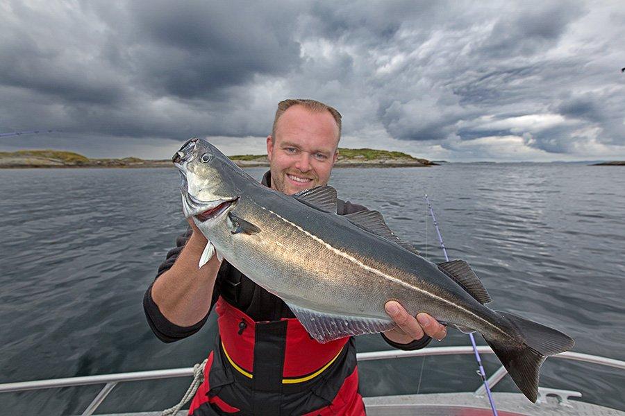 Perfekte Lage für Offshore-Angler - vor der Küste Frøyas tummeln sich viele und große Köhler.