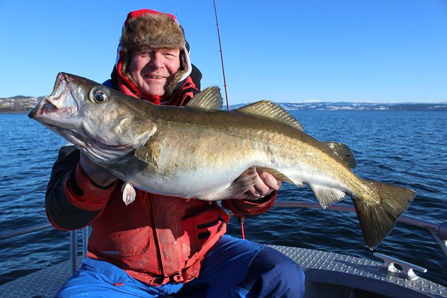 Der Fjord bietet beste Voraussetzungen für die Pollackangelei
