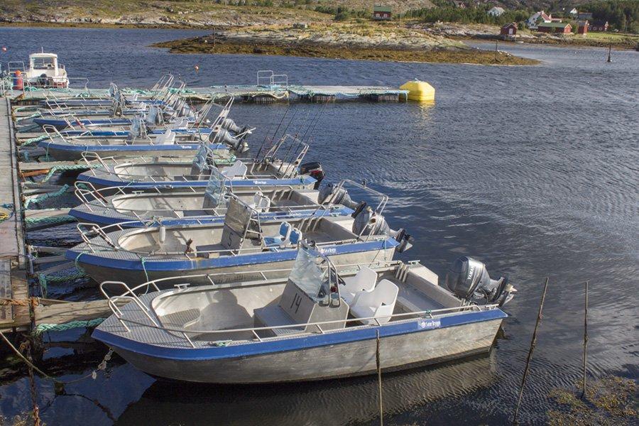 Die Bootsflotte besteht aus voll ausgestatteten 19 Fuß/50-60 PS starken Alubooten.