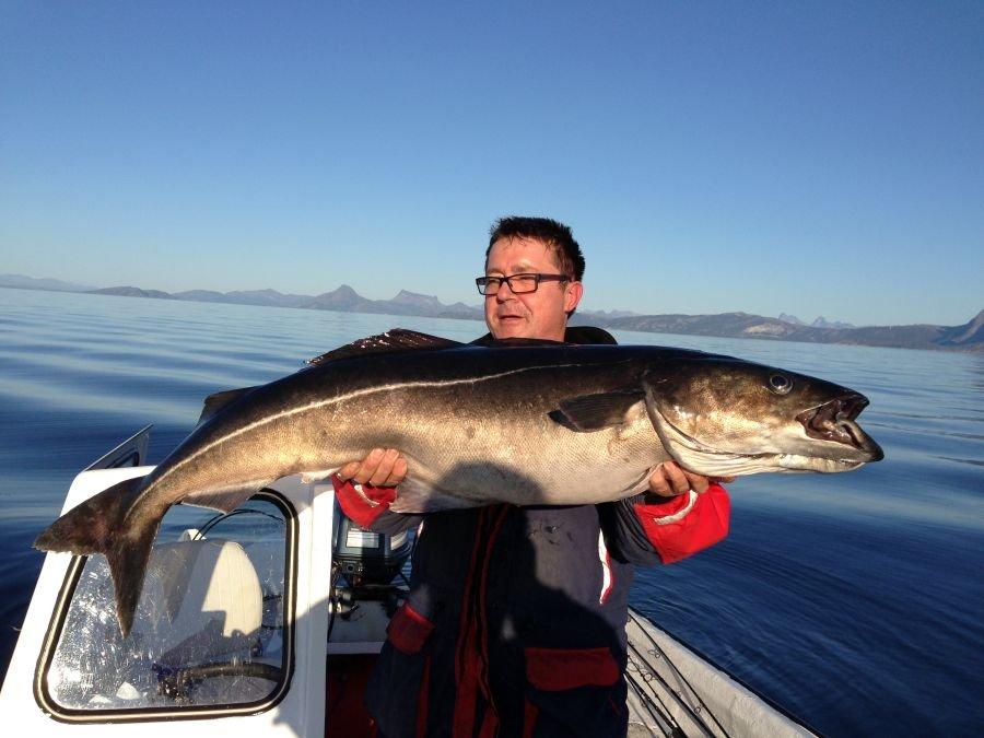 Großköhler von 1,48 Meter Länge und 21 Kilo Gewicht. Direkt vorm Sommersel Fishing Camp gefangen.