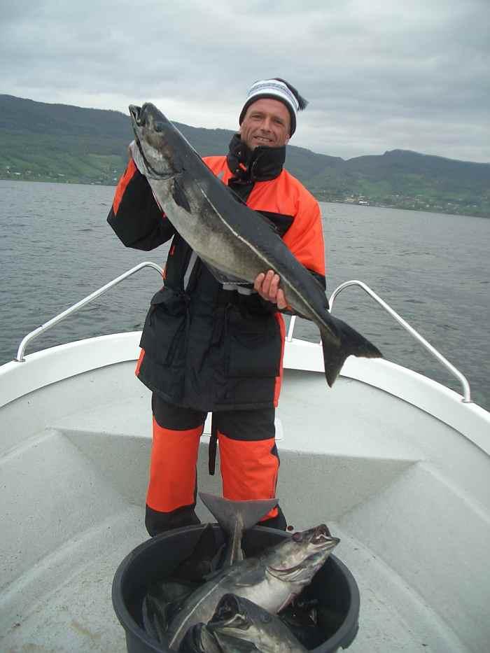Dicke Köhler sind in den Sommermonaten im Fjord unterwegs.