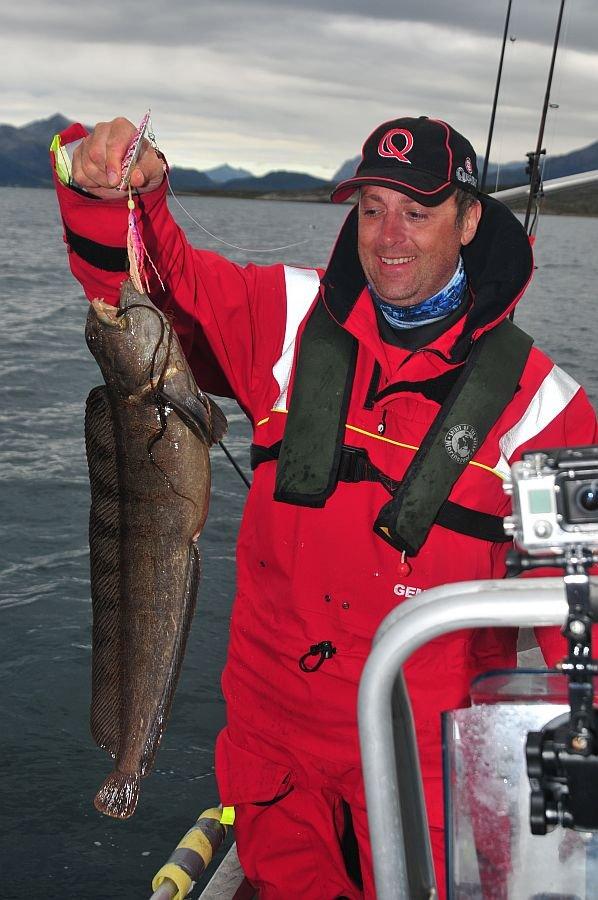 Speziell im Frühjahr können Sie beim angeln vor Senja zahlreich Seewölfe fangen.