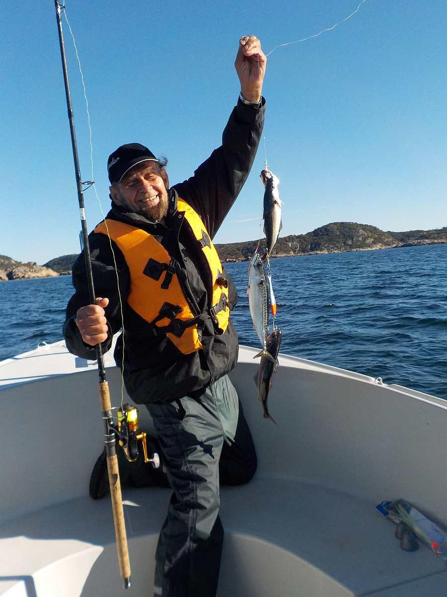 Makrelen satt im Sommer bis Herbst