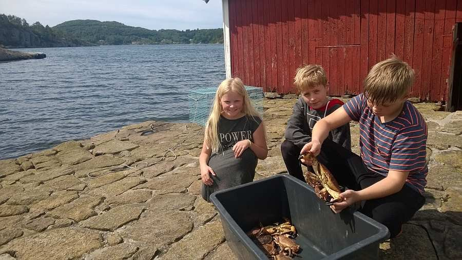 Ein riesen Spaß für Kinder - Krebse fangen direkt am Bootsliegeplatz