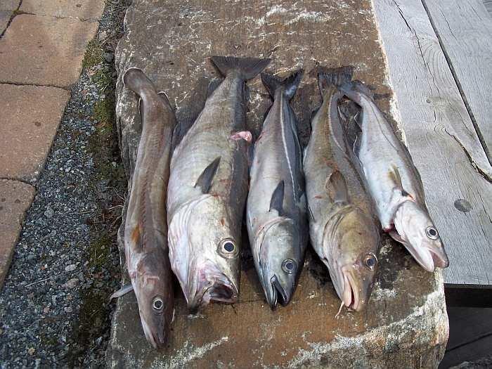 Bunte Arten-Palette südnorwegischer Fische