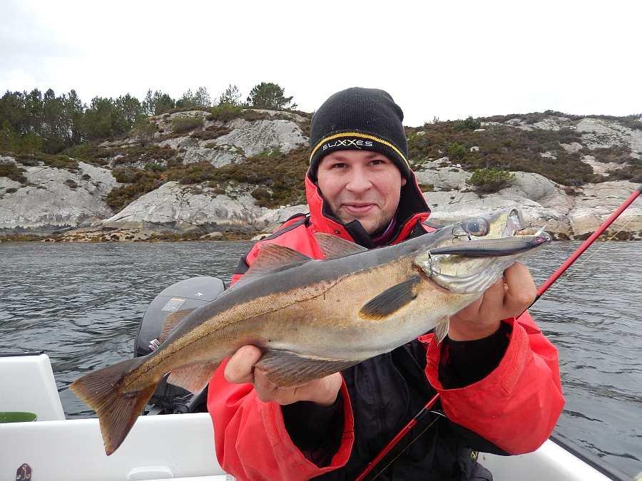 Pollack - einer der beliebtesten Zielfische hier an der Südküste