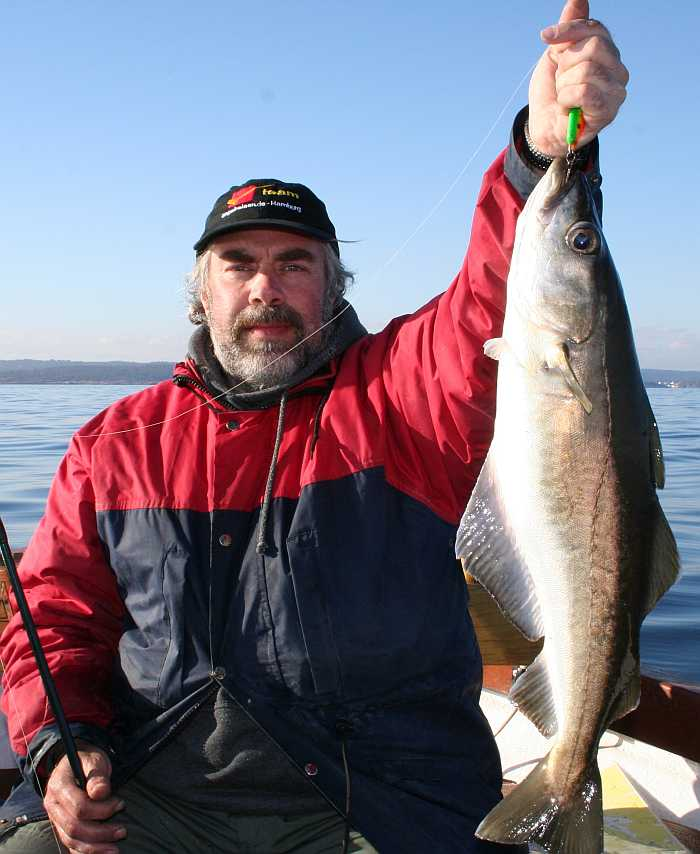 Südnorwegen bietet Pollack-Fische vom Feinsten!