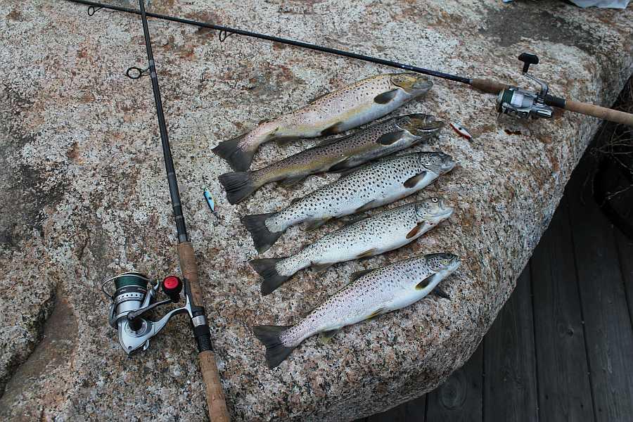 Gerade hier im  Grønsfjord findet man exzellente Meerforeellenbestände. Manchmal lohnt schon der Wurf vom eigenen Steg...