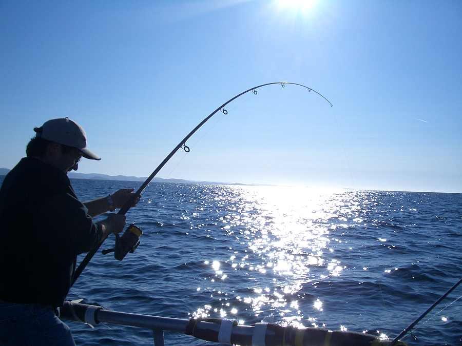 Krumme Ruten bei Köhlerfischen