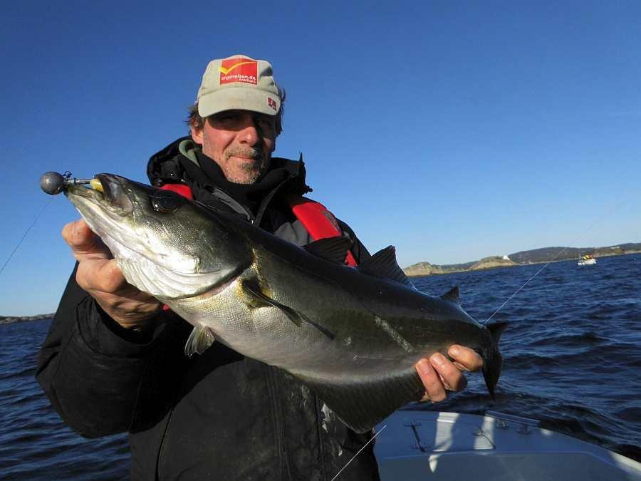 Pollack am leichten Gerät sind wichtige Zielfische hier in Südnorwegen
