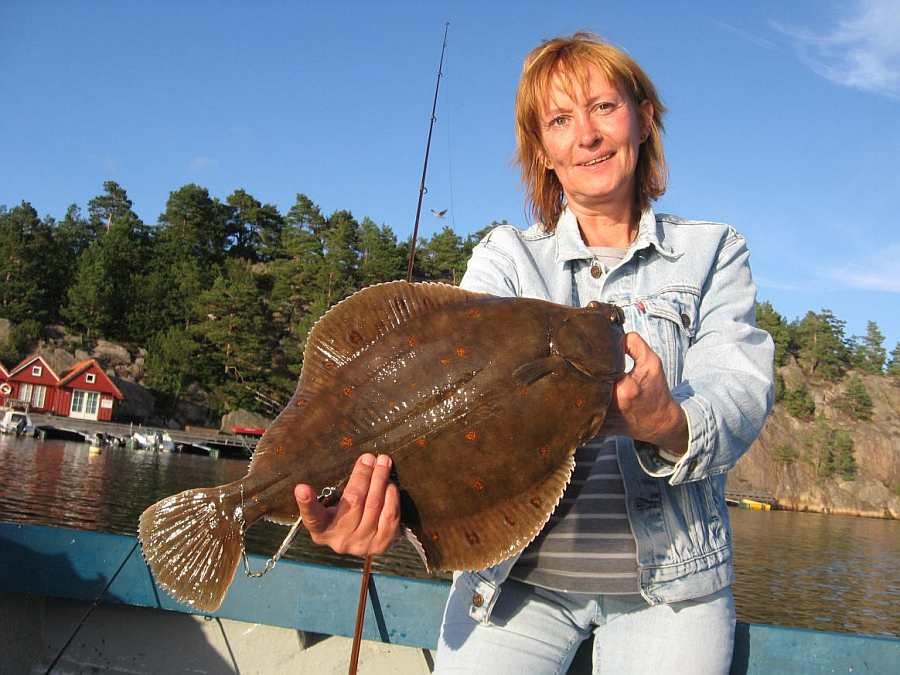 Prächtige Scholle - gefangen in einer der Buchten des Trysfjords