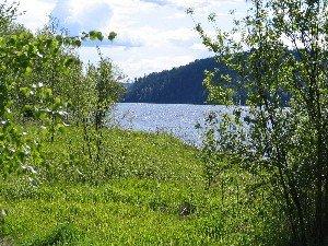 Bewachsene Uferböschungen bieten Stellplätze für die Hechte