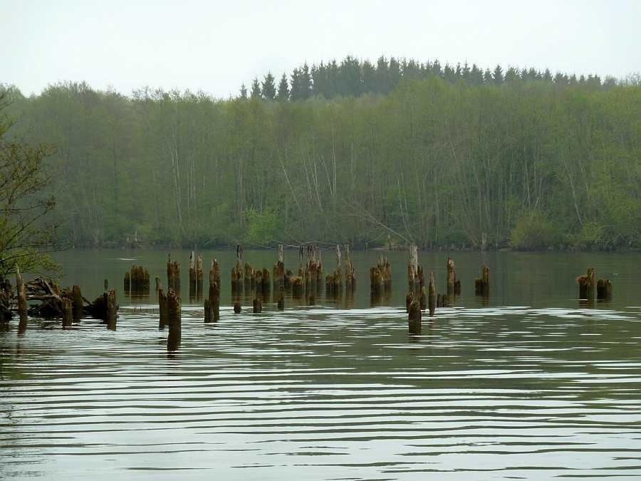 Alte Holzpoller sind oft die Standplätze der Fische