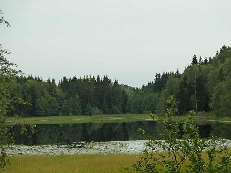 Krautfelder am Südlichen Elchsee