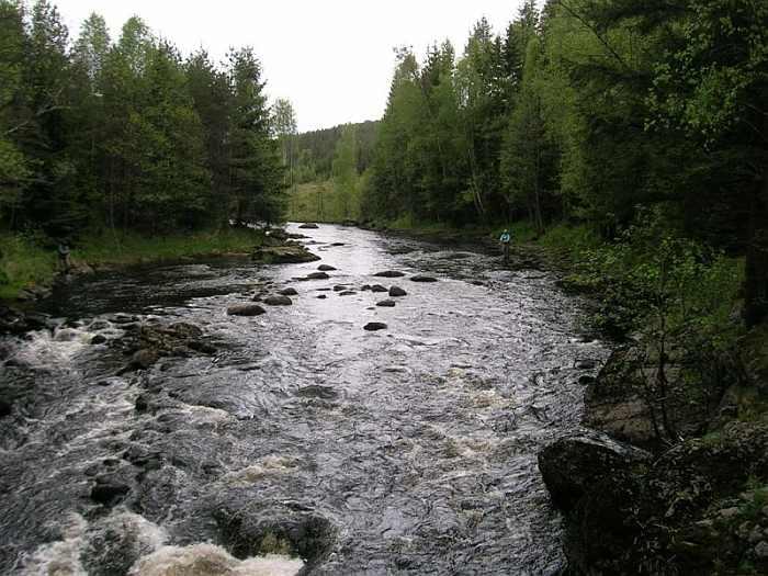 Stromschnellen am Lachsfluss Enningdalselva