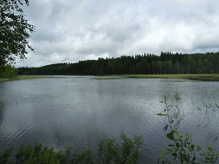 Flachwasserbereiche an See Nettmangen