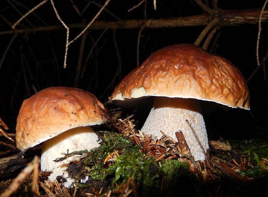 Pilze im Wald...