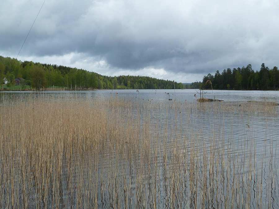 Schilfbereiche am See Rømsjøen