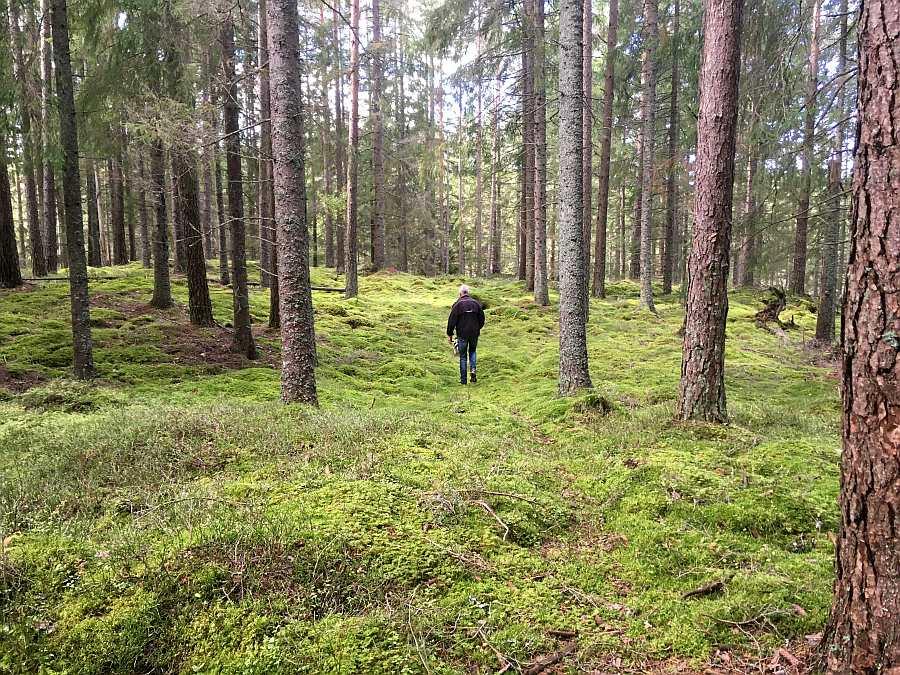 Die nahen umgebenden endlosen Wälder sind wie ein Märchenwald