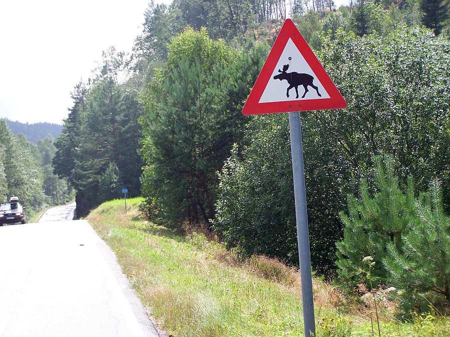 In der Gegend gibt es zahlreiche Elche
