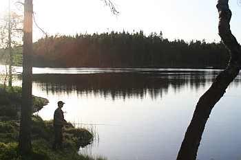 Eines von 68 Forellengewässer im Naturschutzgebiet Vestfjella