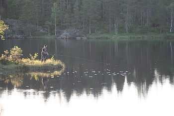 Sowohl Fliegenfischen als auch Spinnangeln und sogar Fischen mit Wurm ist hier erlaubt