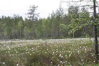 Naturschutzgebiet Vestfjella: Natur pur!