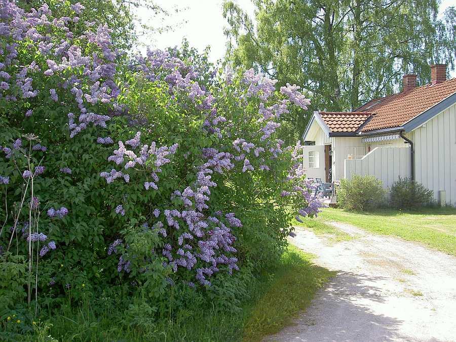 Das Ferienhaus liegt auf einem idyllischen Gartengrundstück