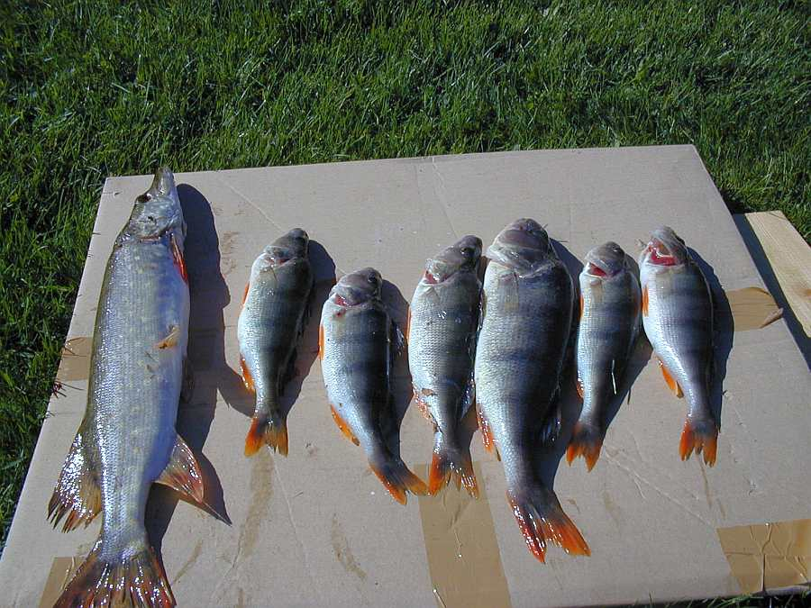 Heute wird Fisch gegessen