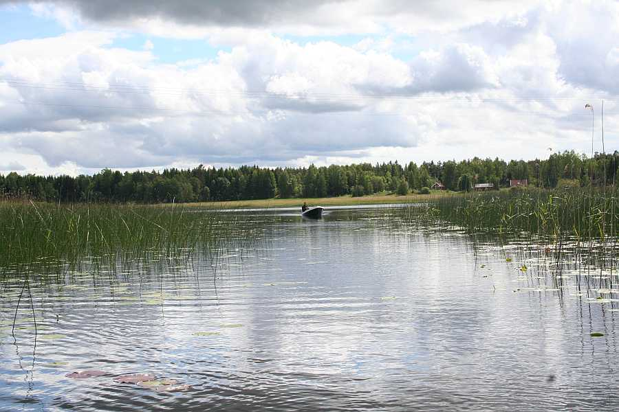Flachwasserbereiche mit Kraut und Seerosen - davon gibt es unzählige hier am Vansjø - den Spinnfischer freut's