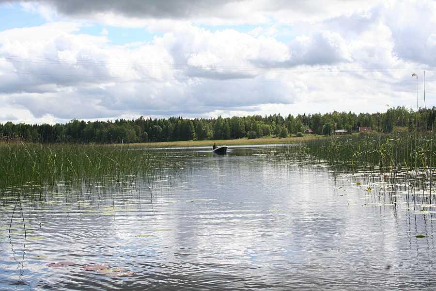 Viele, viele Flachwasserbuchten mit Seerosen und Kraut warten hier am See Vansjø auf Sie!