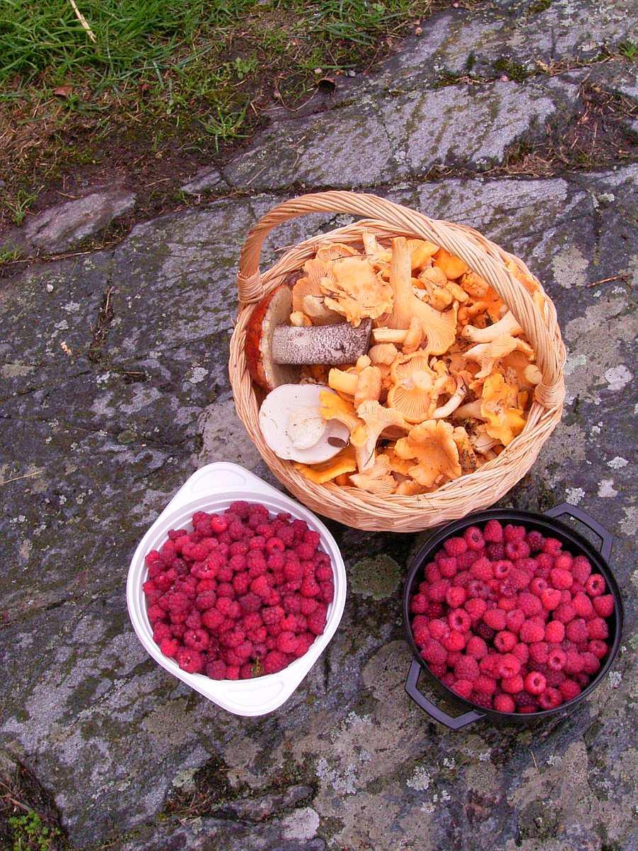 Pilze, Beeren - was darf's sein? Der umgebende Wald bietet viele Schätze