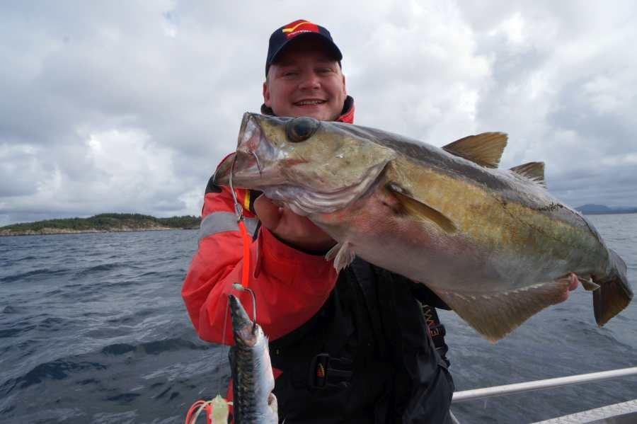 Sotra-Tour September 2015: Pollack als Beifang beim Seehecht-Angeln
