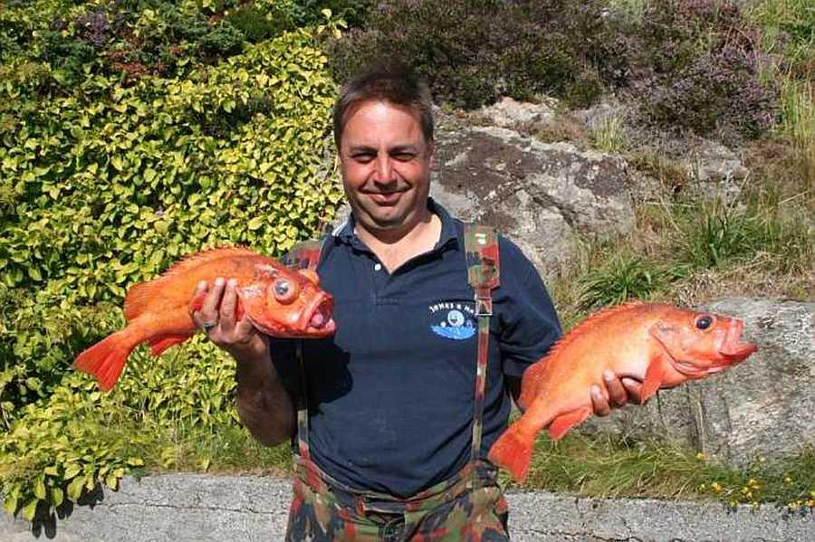 Rotbarsch - noch ein klassischer Beutefisch vor Sotra
