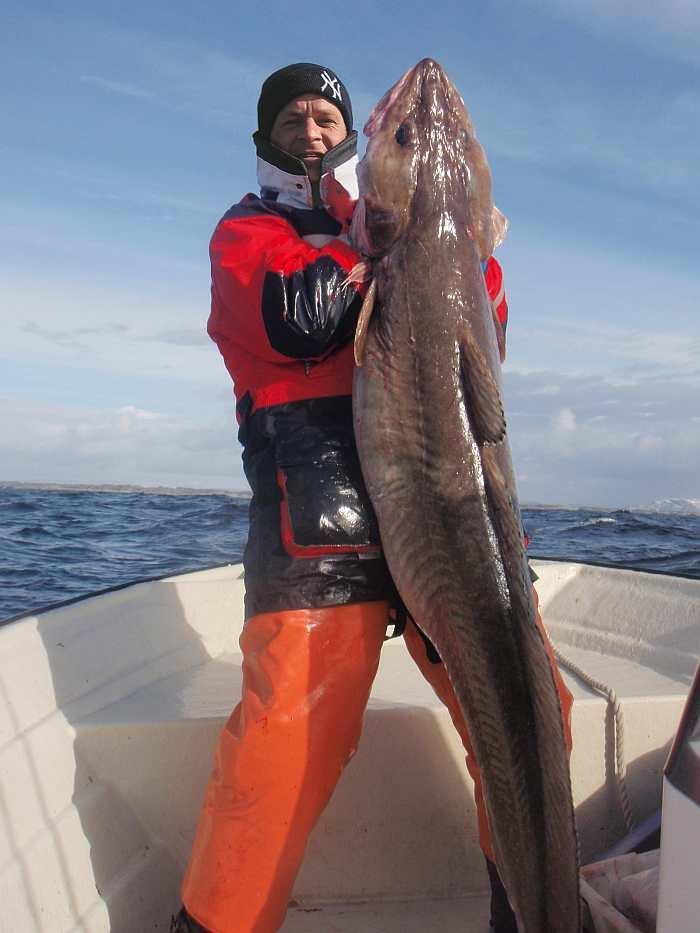 Der Leng ist meist Zielfisch Nummer eins. Im Folgenden sehen sie aktuelle Fänge unserer Gäste und Mitarbeiter