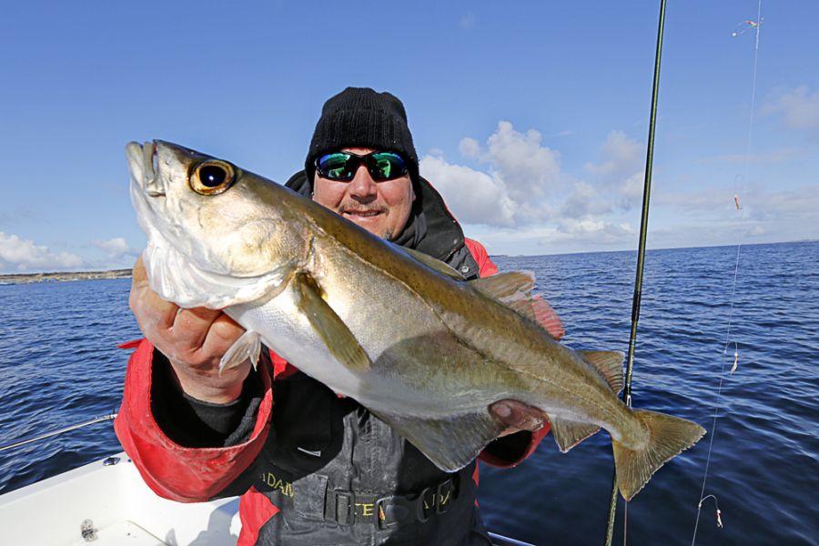 Sportfisch Nummer 1 im Sommer: Der kampfstarke Pollack