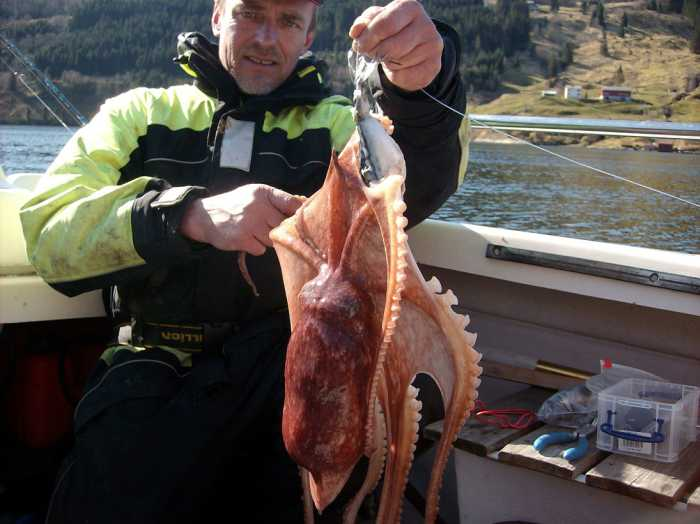 Wer einen Kalmar fängt, nimmt ihn am besten an der selben Stelle als Köder!
