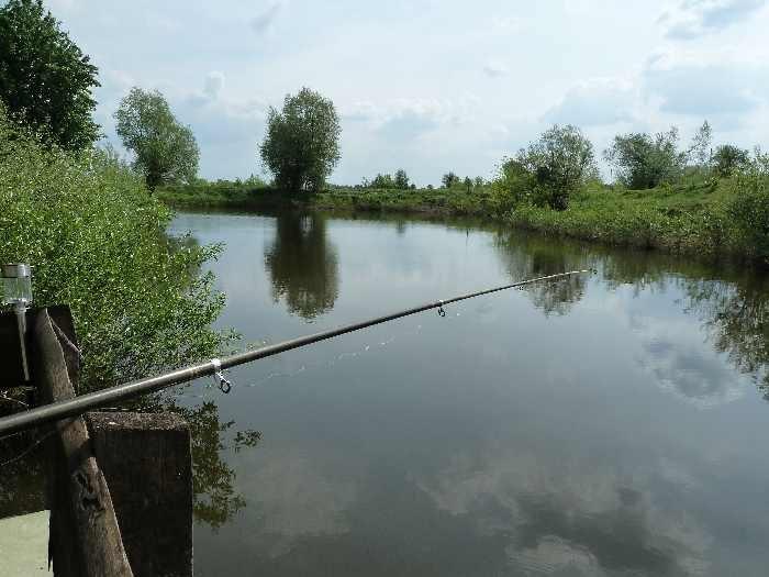 Am eigenen Hausteich dürfen Köderfische gefangen werden.