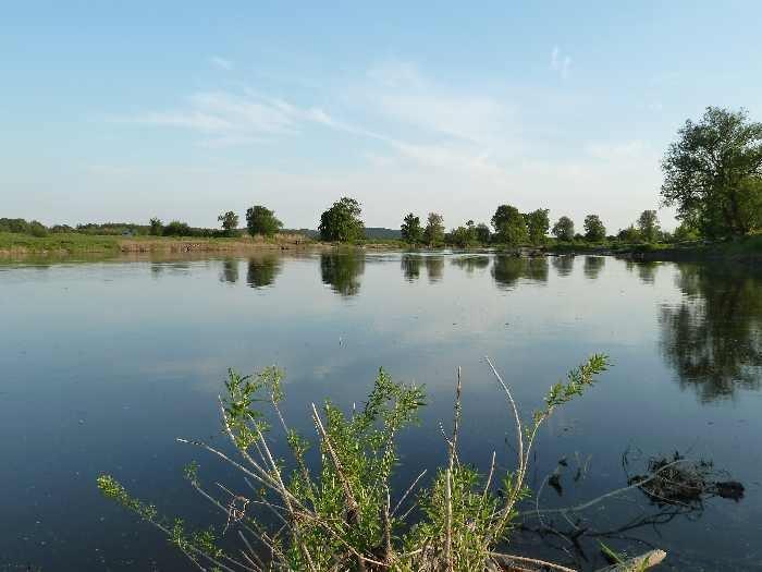 Die Warthe - zahlreiche Fischarten sind in diesem Fluss heimisch