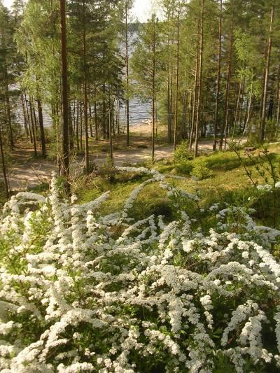 Das Ferienhaus steht inmitten eines herrlichen Waldes.