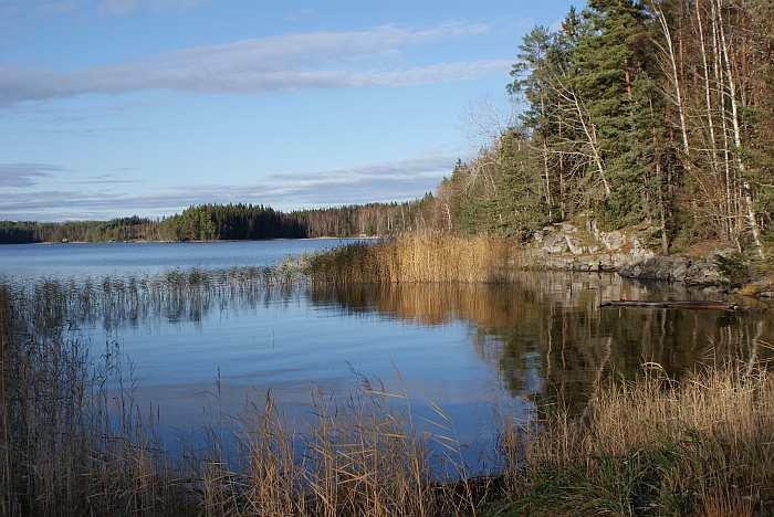 Schilfgürtel und Flachwasserbereiche wie gemacht zum Fischen auf Räuber.