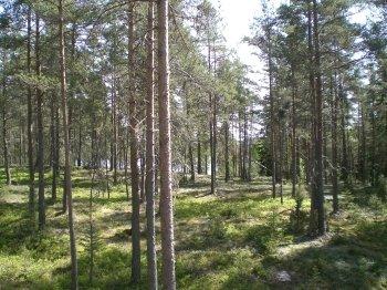Natur pur! Schweden wie man es sich vorstellt.