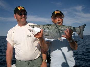 Die Gullspångs Lachse sind wunderschöne Fische!
